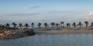 exotiskt tropiskt för strand royaltyfria foton