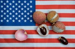 Exotiskt tropiskt litchiplommonbär på USA flaggan royaltyfri bild