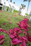 exotiskt vändkretsbröllop wide royaltyfria bilder