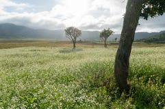 expõe ao sol e as árvores e o campo da mostarda com a flor branca em DonDuong - Dalat- Vietname foto de stock royalty free