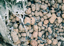 Expanded Clay Aggregate. Close-up with Shallow Stock Photography