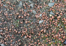 Expanded Clay Aggregate Stock Photos