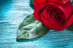 Expanded red rose with green leaves on wooden board holidays con Royalty Free Stock Photo