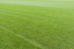 Expanse of green turf Royalty Free Stock Images