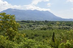 Expanse of trees. The plain of the Volturno River, Squille an town in the province of Caserta, region Campania Italy, August 2013 Royalty Free Stock Photos