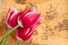 Expansion. Of tulips worldwide. Old map and tulips stock photos