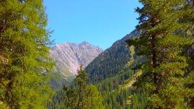 Expansion der Natur zwischen den Bäumen Lizenzfreies Stockfoto