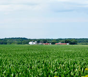 Expansive Midwest corn field Royalty Free Stock Images