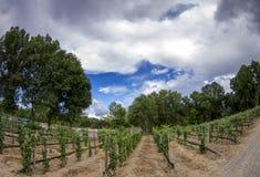 New Mexico Vineyard Stock Photo
