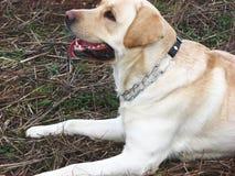 Expectant dog stock photography