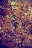Expectation of autumn Stock Photo