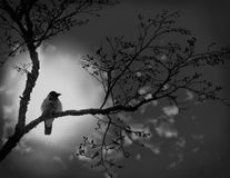 In expectation of warmth. Night. A moonlight. To a raven is coldly and lonely Stock Photography