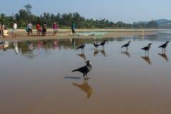 Expectativa Cuervos que esperan la vuelta de pescadores Imagen de archivo