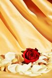 Expectativa romântica Fotografia de Stock Royalty Free