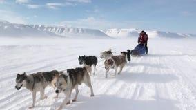Expedición de la gente en el camino esquimal fornido del equipo del trineo del perro de Polo Norte en el ártico metrajes