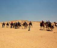 Expedición del camello Imagen de archivo