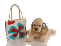 Expensive dog Stock Image