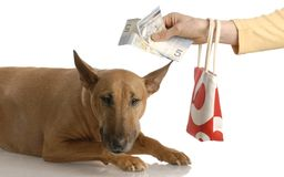 Expensive dog Stock Photo
