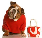Expensive dog Royalty Free Stock Photography