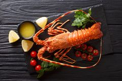 Expensive food: spiny boiled lobster with fresh tomato, lemon an. D melted butter close-up on black stone. Horizontal top view from above royalty free stock photography
