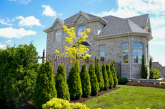 Expensive homes in Canada and Green Hedge. Of Thuja Trees Royalty Free Stock Photo