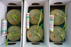 Expensive honeydew melons in Hokkaido, Japan stock photography