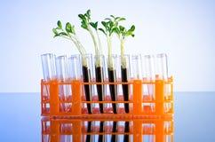 Experiência com seedlings verdes imagens de stock
