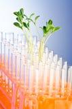 Experiência com seedlings verdes Fotos de Stock Royalty Free