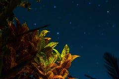Experiência da noite de Indonésia, Bali fotografia de stock