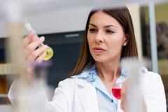 Experiência de execução do cientista da mulher no laboratório de pesquisa Imagens de Stock