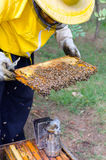 Experienced beekeeper inspecting health state of apiary Stock Photography