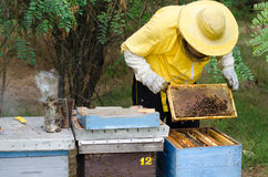 Experienced beekeeper inspecting health state of apiary at the e Royalty Free Stock Images