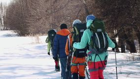 Experienced climbers with backpacks behind the back go is a line in the snow along dry trees stock video footage