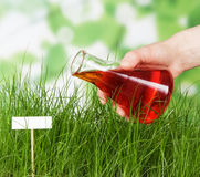 Experienced flower bed watered experimental fluid Stock Image