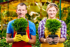 Experienced gardeners with seedlings in the pots Royalty Free Stock Photography