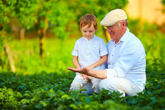 Experienced grandfather teaching curious grandson, potato rows Royalty Free Stock Photos