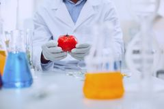 Experienced knowledgeable scientist testing tomatoes. GMO vegetables. Determined professional biologist wearing a uniform and testing tomatoes stock image