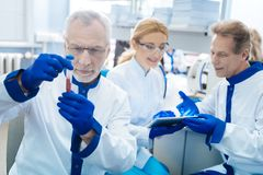 Experienced researchers making analysis in the lab. Blood analysis. Concentrated grey-haired bearded experienced researcher holding and looking at the test tube Stock Photos