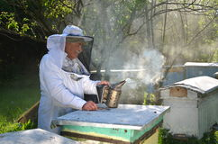 Experienced senior apiarist is setting a fire in a bee smoker. Experienced senior apiarist in his apiary setting a fire in a bee smoker stock images