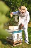 Experienced senior beekeeper holding honeycomb fro Stock Photos