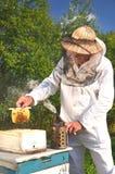 Experienced senior beekeeper holding honeycomb fro Stock Photo