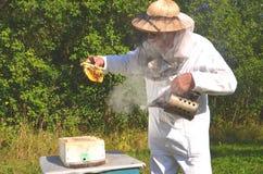 Experienced senior beekeeper holding honeycomb fro Royalty Free Stock Photos