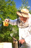 Experienced senior beekeeper holding honeycomb fro Royalty Free Stock Photography
