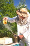 Experienced senior beekeeper holding honeycomb fro Royalty Free Stock Image