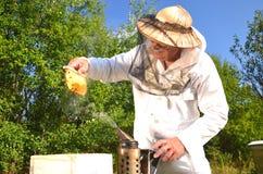 Experienced senior beekeeper holding honeycomb fro Royalty Free Stock Photo