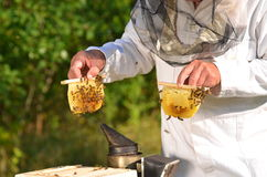 Experienced senior beekeeper holding honeycombs fr Royalty Free Stock Photos