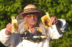 Experienced senior beekeeper holding honeycombs from small wedding beehive Royalty Free Stock Photos