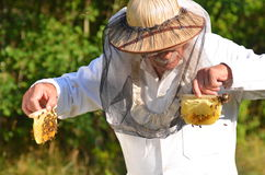 Experienced senior beekeeper holding honeycombs from small wedding beehive Royalty Free Stock Images