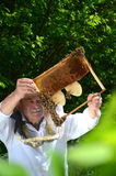 Experienced senior beekeeper making inspection in apiary Stock Photography