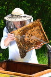 Experienced senior beekeeper making inspection in apiary Royalty Free Stock Images